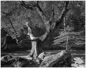 Early-morning-merced-river-ansel-adams