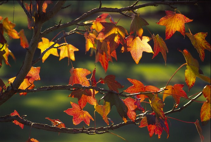 Autumn leaves with green
