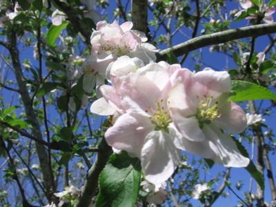 Spring_002