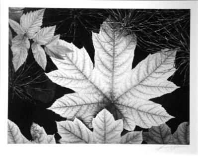 Adams_leaf_glacier_bay